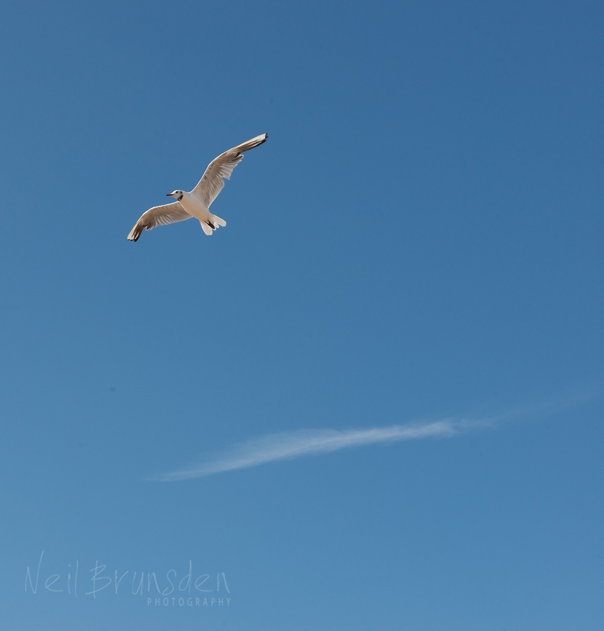 One Gull, One Cloud