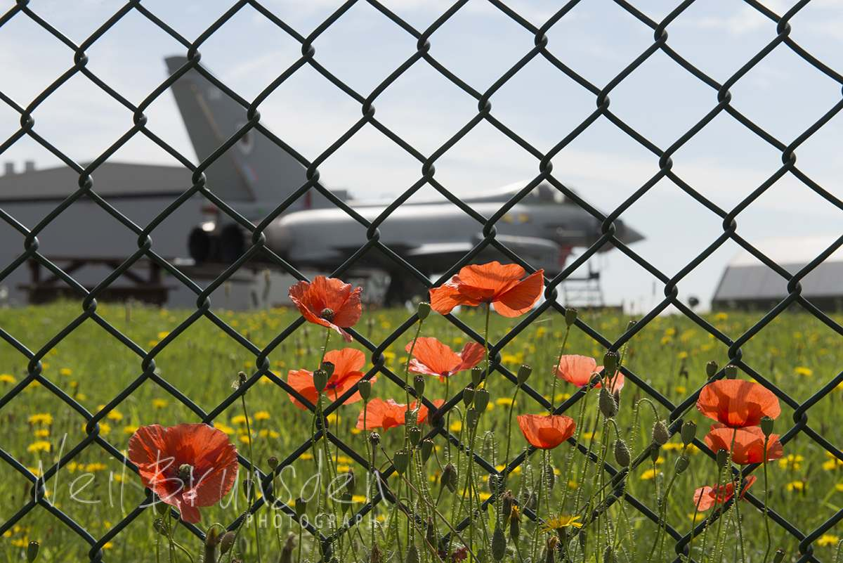 Typhoon and Poppies